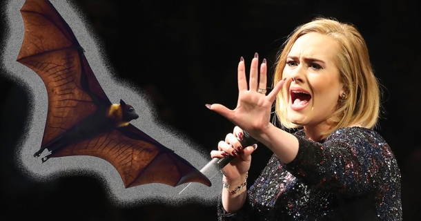 Летучая мышь на концерте Адель. Забавная реакция певицы